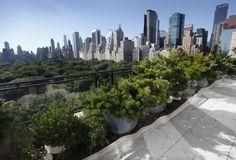 Terraço do edifício Treetops, em Manhattan, NY