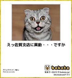 えっ佐賀支店に異動・・・ですか Blog Entry, Cats, Funny, Animals, Unique, Design, Gatos, Kitty Cats, Animaux