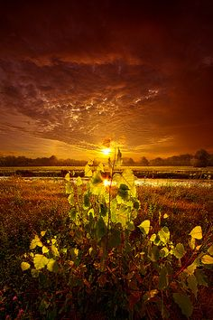 Wisconsin Horizons by Phil Koch. Lives in Milwaukee, Wisconsin, USA. phil-koch.artistwebsites.com www.facebook.com/MyHorizons