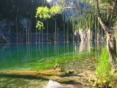 Drops Local Friend: A floresta por baixo d'água no Cazaquistão | Catraca Livre