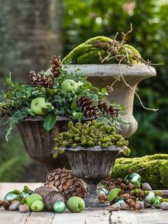 Gardening Autumn - Moss, pine cones and green apple deco - With the arrival of rains and falling temperatures autumn is a perfect opportunity to make new plantations Container Plants, Container Gardening, Fall Containers, Pot Jardin, Garden Urns, Moss Garden, Garden Deco, Thanksgiving Table Settings, Deco Floral