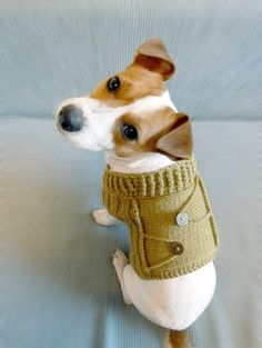 Knitted Mustard Dog Sweater S - size / Dog coat / Dog costume / Dog Clothes / fttt Jack Russell Terriers, Cute Puppies, Cute Dogs, Dog Sweater Pattern, Sweater Patterns, Dog Pattern, Dog Clothes Patterns, Tier Fotos, Dog Sweaters