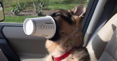 Dogs deserve the joy of a secret menu, too. Starbucks has a special drink for dogs that isn't commercially advertised, and one adorable puppy named Leopold just discovered it. An espresso cup with a dollop of whipped cream, the 'puppuccino' was an instant hit with the 4 1/2-month-old German Shepherd, who had it for the first time on Wednesday. SEE ALSO: Having a rough day? Here's a Japanese dog wearing cardboard cutouts Leo sniffed the cup