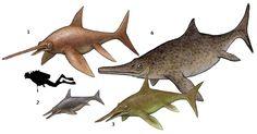 1. Eurhinosaurus longirostris 2. Ichthyosaurus communis 3. Excalibosaurus costini 4. Temnodontosaurus platyodon