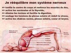 Yoga Fitness Flat Belly - - bien-être massage refléxologie plantaire shiatsu zen santé naturelle - There are many alternatives to get a flat stomach and among them are various yoga poses. Acupressure Treatment, Acupuncture, Tai Chi, Yoga Fitness, Plexus Solaire, Reiki Healer, Reiki Symbols, Yoga Posen, Qigong