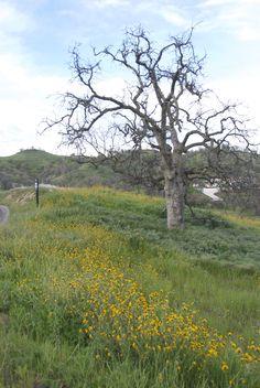 A gorgeous scene at Ventana Hills.