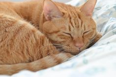 Nothing more restful than to watch a cat curl up and sleep... More