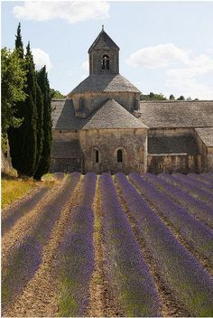 Lavendar in Provence                                                                                                                                                                                 More