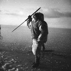 'Hobbits of the Arctic' Traced by DNA.  Dorset people or Paleo-Eskimos lived by themselves for more than 4000 years and none of their DNA is found in the Eskimos, Enuit or Native Americans.  They were wiped out before the arrival of Viking raiders from Scandinavia. : DNews