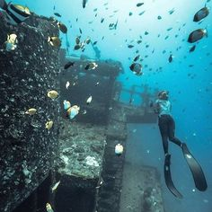 Wreck diving..... Would you? #nvr2lte2lve #scuba #wreckdiving #follow #like #me #freediving #ocean #fish