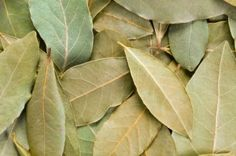 Bay Leaves full frame background Also called bay laurel or Laurus nobilis Used as a spice in cuisines and also in medicine Bay Leaves Uses, Home Remedies, Natural Remedies, Health Remedies, Bay Laurel Tree, Laurus Nobilis, Diabetes, Rv Organization, Organizing Ideas