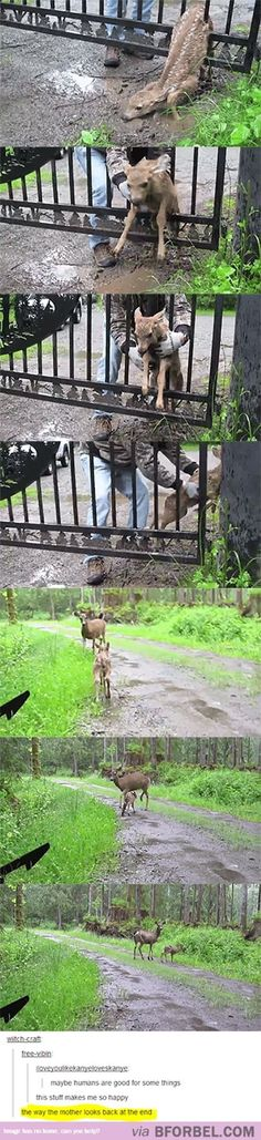 Faith In Humanity Restored… Human helps baby deer caught in fence Animals And Pets, Funny Animals, Cute Animals, Baby Animals, Faith In Humanity Restored, In This World, Make Me Smile, Animal Rescue, Bambi