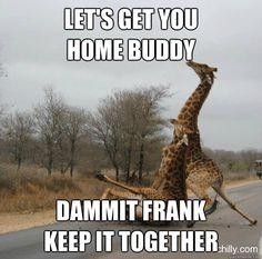 Bilderesultat for giraffe dammit frank
