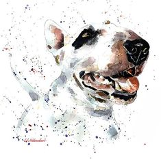 Bull Terrier Smile Print Watercolour A3 3040cm/1612
