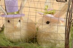 """9"""" RABBIT COUPLE W/HATS IN CAGE CREAM/PINK/LAVENDER"""