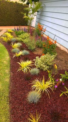 mulch and drought hardy plants