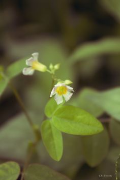 Descent Flower