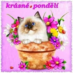 Solve krásné pondělí jigsaw puzzle online with 64 pieces Deco, Cat Love, Good Morning, Jigsaw Puzzles, Teddy Bear, Animals, Puzzle Online, Appliques, Faces