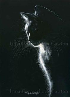 Cat Paintings Crazy Cats Animal Pics Art Black Adorable Animals Gato Paper Pastel