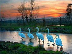 Elfstedentocht beautiful image **+