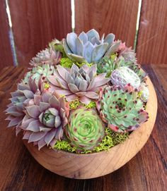 Succulent Garden Bowl by LoliviaGifts on Etsy