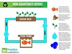 hydroponics how it works - Google Search