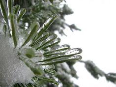 数千年の眠りから次々と目を覚ます氷の中の生命体が生物の進化をひも解く時