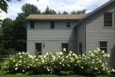 Planted at the perimeter ofthe farmhouse, white hydrangea hedges provide privacy without afuss.