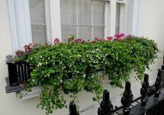 Create window boxes that add beauty to your home, garage, or shed with these   easy plant-by-number ideas. Description from ugicyxacavu.keep.pl. I searched for this on bing.com/images