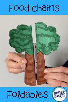 A science craft activity which can be differentiated if required. This resource has templates for food chains in 3 habitats - a woodland, ocean and a rainf. Science Projects For Kids, Science Crafts, Preschool Crafts, Crafts For Kids, Food Chain Activities, Kids Learning Activities, Science Activities, Camping Activities, Party Activities