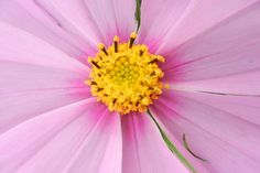 Garden flowers - Extreme closeup - 262