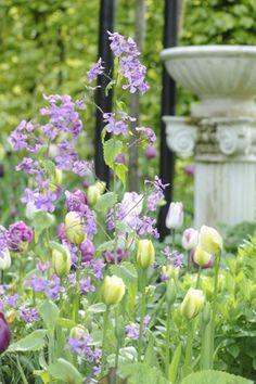 Beautiful Garden ~