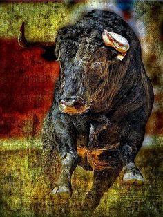 Toroooo !!! Bull Pictures, Eagle Pictures, British Wildlife, Wildlife Art, Animal Paintings, Animal Drawings, Taurus Art, Bull Painting, Buffalo Art