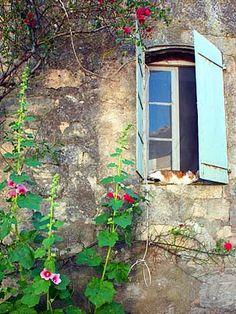 Summer in Provence. Cat & Shutters by Barbara van Zanten