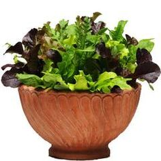 Simply Salad Alfresco Mix Lettuce Seeds