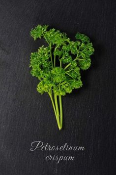 Fresh Green Parsley (Petroselinum crispum) Herb and Spice Journal: 150 Page Lined Notebook/Diary