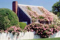 Marthas+Vineyard+Beaches | Rose Covered Cottage - Martha's Vineyard, Massachusetts (credit:Galvin ...