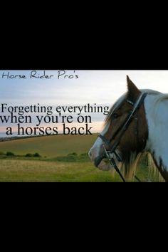 The main reason I want a horse!