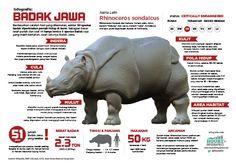 Infografis : Badak Jawa yang hampir punah (versi Indonesia)