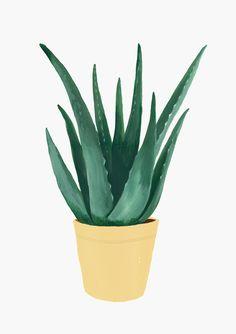 Plantas en papel I on Behance Plant Painting, Plant Art, Painting & Drawing, Cactus Painting, Drawing Drawing, Cactus Drawing, Plant Drawing, Plant Illustration, Botanical Illustration