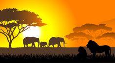African savanna an evening landscape Stock Photography