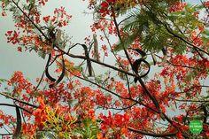 Die Hülsen des Tamarindenbaums sind sooo lecker. Die müsst ihr probieren! Mehr über unsere Reise durch Kombadscha gibts hier: http://ift.tt/2bl3yfo