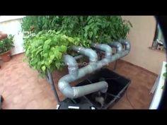 Cultivo Hidroponico casero 2.4 - YouTube