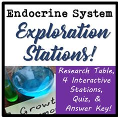 These endocrine system stations are an interactive way for your high school science students to review endocrine glands, hormones, and their functions! This 17 page packet includes a Day 1 Research Worksheet which students will complete the day before they visit the stations, a Day 2 Station Handout for students to complete as they visit each station, cards for printing and placing at various stations, a Day 3 post-station quiz, and a detailed answer key.