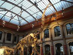 Brachiosaurus au Museum fur Naturkunde, Berlin