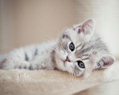 οκ, τώρα θέλω πάλι γατί!