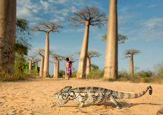 National Geographic Traveler Photo contest is a yearly event were people send in photos of wildlife. The annual National Geographic Traveler Photo Contest is coming to an end. Wild Life, Les Reptiles, Reptiles And Amphibians, Animal Photography, Nature Photography, National Photography, Imagen Natural, National Geographic Photo Contest, Cool Pictures