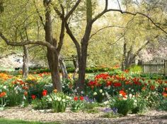 Foster Park gardens in Fort Wayne Indiana I'm so blessed to have this right across the street from my neighborhood! :)