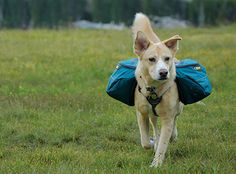 Approach Pack™ | Everyday Hiking Pack For Dogs | Ruffwear