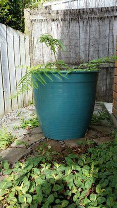 Rough Old Cast Iron Laundry Wash Boiler Flower Pot Garden ...